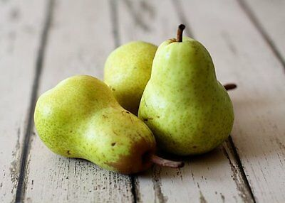 Perfect Pear Fragrance Oil Candle/Soap Making Supplies **Free Shipping **