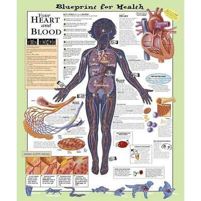 Blueprint for Health Heart and Blood Paper Chart