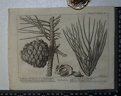1776 - The Pine Tree Engraving, Pluche, Spectacle of Nature
