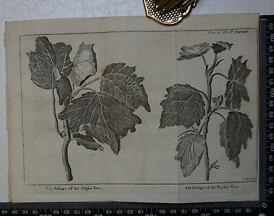 1776 - Foliage Aspin Tree & Poplar Tree  Engraving, Pluche, Spectacle of Nature