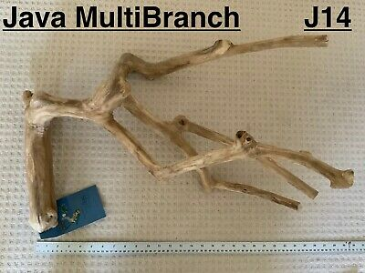 Java Wood Multibranch Perch Suitable For Large/XL Birds And Parrots - J14