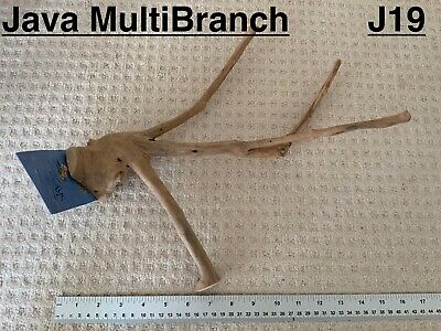 Java Wood Multibranch Perch Suitable For Small Birds Parakeets And Parrots - J19