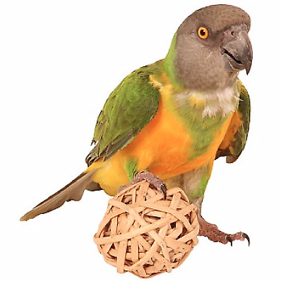 Munch Balls - Woven Willow Chew Toy for Parrots - Woven Natural Vine