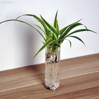 2E69 Home Clear Cylinder Glass Flowerpot Mini Wall Hanging Water Plant Vase Tank