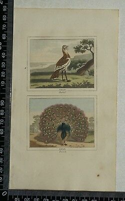 1808 Buffon's Hand Coloured Engravings of the Bustard and the Peacock