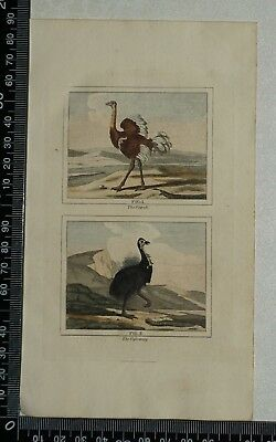 1808 Buffon's Hand Coloured Engravings of the Ostrich and the Cassowary