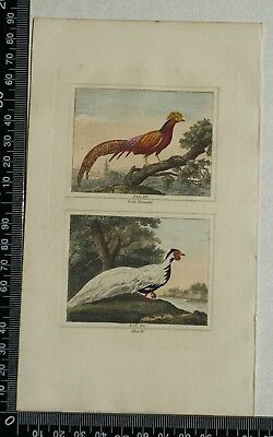 1808 Buffon's Hand Coloured Engravings of Gold Pheasant and Silver Pheasant