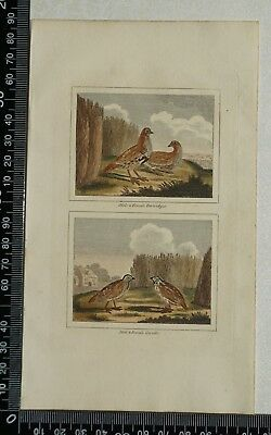 1808 Buffon's Hand Coloured Engravings of Male & Female Partridges and Quails
