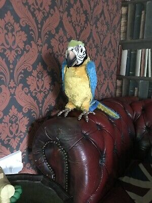 Fur Real talking parrot, full size realistic