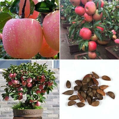 Home Gardening Outdoor Plant Bonsai Delicious Apple Tree Fruit Seeds O041