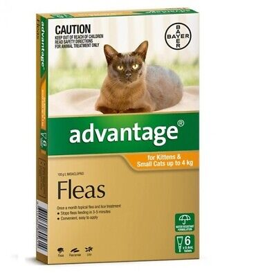 NEW Advantage For Kittens & Small Cats Up To 4kg 6 Pack