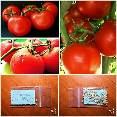 GOLIATH HYBRID TOMATO SEEDS ****BULK 300 COUNT PKT**** 1 POUNDERS BRIGHT RED
