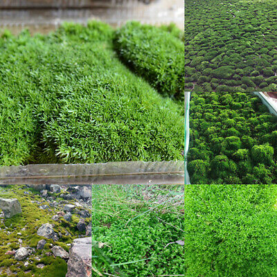 Live Aquarium Plants / Moss on Mesh /Easy Grown / High Quality / All Species