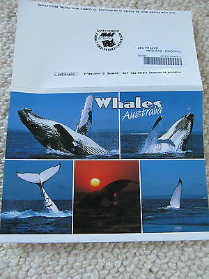 Modern Murray Views Foldout Colour View Folder, Whales Australia