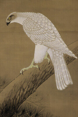 "JAPANESE HANGING SCROLL ART Painting ""White Hawk"" Asian antique  #E6423"