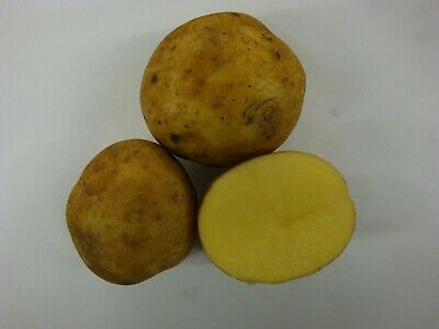 Certified YUKON GOLD  Seed Potatoes for Spring 2019-FREE SHIPPING w/ FREE GIFT