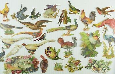 1880's Lovely Die Cut Exotic Birds & Chickens Victorian Cards Lot of 25 Z56