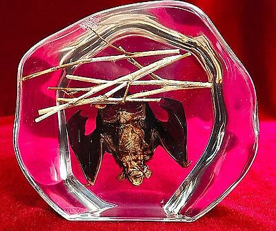 REAL Bat Hanging in Decorative Acrylic Block-Taxidermy Paperweight-Halloween