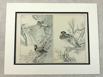 Antique Japanese Print  Bird Painting Duck Blackbird Meiji Oriental Art