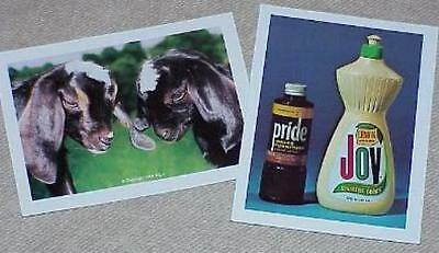 Funny Photos!   Pride and Joy & The Kids --TWO each of the classic gags     TMGS