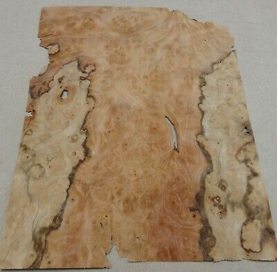 "Pimento Burl wood veneer 3/"" x 6/""-7/"" raw with no backing 1//32/""-1//42/"" thick"