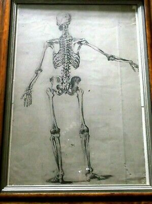 Rare Antique 18/19Th Century Large Ink Drawing The Rear View Of A Human Skeleton