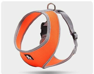 Cute True Love Breathable Soft Mesh Padded Dog Harness in 8 Colours