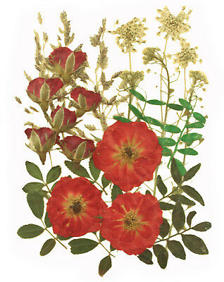 pressed flowers, red rose, red rose buds, lace flower, alyssum, foliage