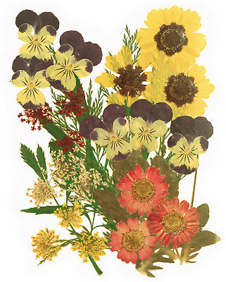 pressed flowers, pansy, marguerite, lace flowers, garden tickseed, foliage