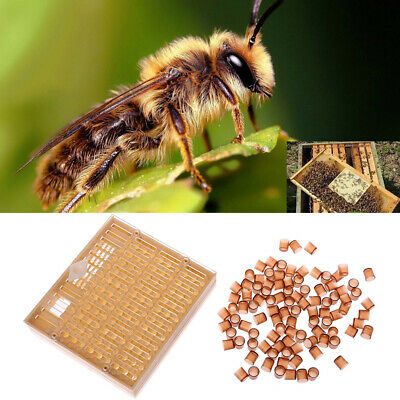 Beekeeping Equipment Queen Rearing Cell Cup Kit Apiculture BeeKeeper Tool Set