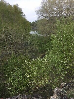 Goldfinch FREEHOLD plot of LAND for Sale Wrexham, North Wales. Lakeside