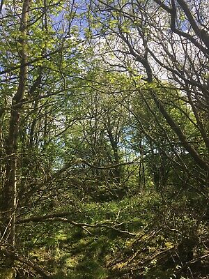 Tawny Owl FREEHOLD plot of LAND for Sale Wrexham, North Wales