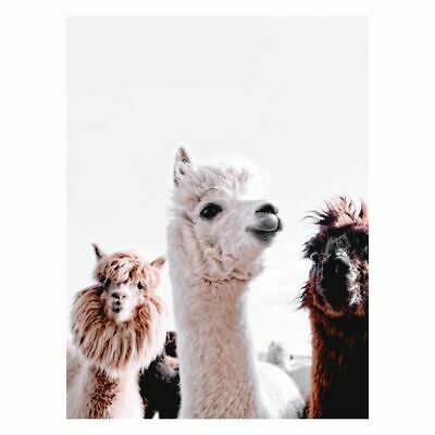 NEW A La Mode Studio Llamas on Parade Canvas Print