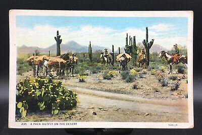 Postcard~Arizona~A Pack Outfit on the Desert~Horses and Donkeys~Cowboys~Unposted