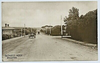 C1910 Scarce Rp Postcard Brighton Road Hedge Looking South Adelaide S.aust A75