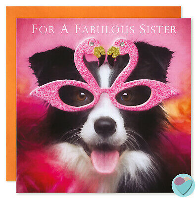 Birthday Card Fabulous Birthday Wishes To Or From The Border Collie Dog Lover 2 75 Picclick Uk