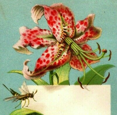 Lot Of 3 1870's-80's Victorian Cards Beautiful Flowers Insects Cherries P152