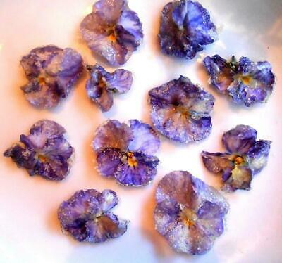 Candied Flower, Candied Pansies, lovingly hand painted. Grown & Made in Canada,