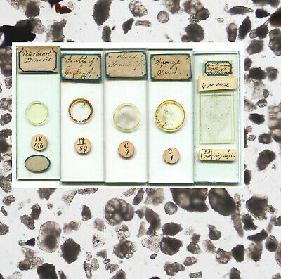 5 Early Diatom & Foraminifera Microscope Slides