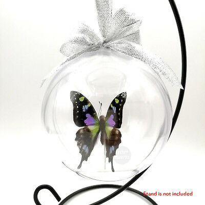 1 Real Graphium Weiskei Butterfly Taxidermy 3D View Xmas Christmas Tree Ornament