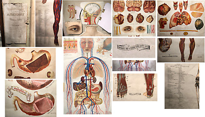 1889 CENTRAL SCHOOL SUPPLY HOUSE Anatomical Flip Chart 10 24 x 50 Inch Overlays
