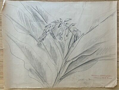 JULIETTE MAY FRASER Original Hawaii Signed WPA Vintage Flower Drawing LISTED