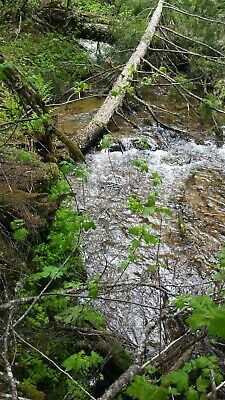 Gold Mine Miner's Creek Gold Placer #1 20 Acre Gold Mining Claim   Idaho