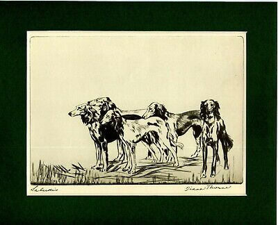 ~ Salukis ~  Print by Diana Thorne Genuine Vintage 1935