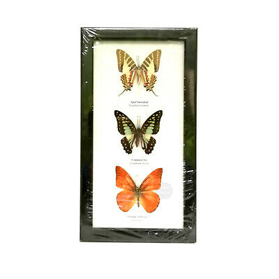 Real 3 Butterfly Insect Taxidermy Butterflies Entomology Framed Wall Hanging #2