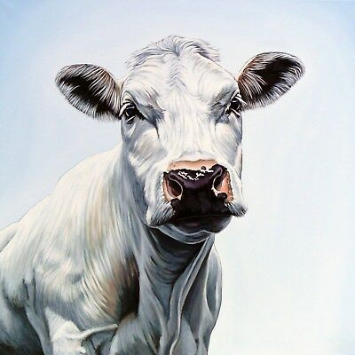 Stunning Cow Face Canvas Print Squared