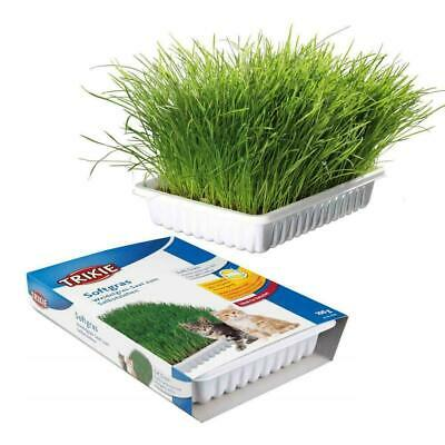 Trixie Cat Grass Seeds & Tray Kit 100g - Aids Digestion, Helps With Hairballs