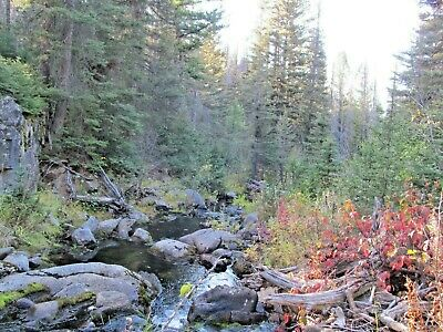 Montana Gold Mine Prime Mining on Telegraph Creek 20 Acre Placer Claim Panning