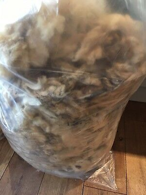 Texel Raw Natural Fleece 2.1Kg Sheep's Wool for Hand-Spinning