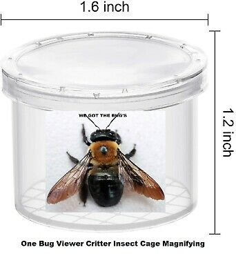 ⭐️⭐️⭐️⭐️⭐️1 Real  Carpenter bee WET SPECIMEN INSECT TAXIDERMY WE GOT THE BUG'S**
